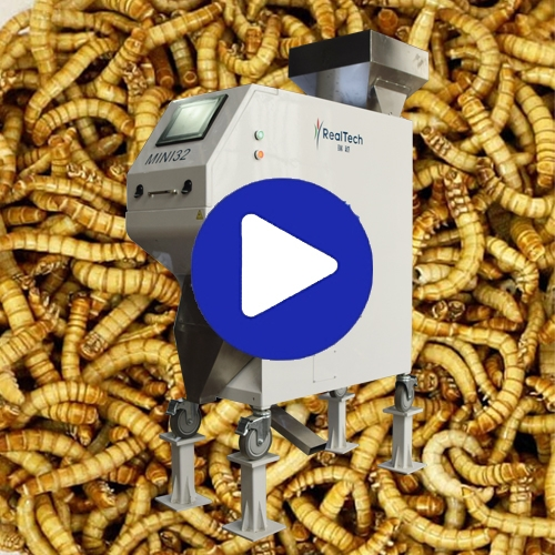 Yellow Mealworm Color Sorter