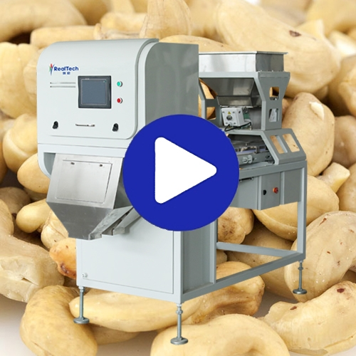 Cashew Nuts Sorting